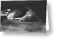 Stray One Greeting Card