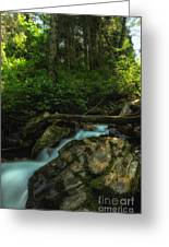 Streaks Of Moss Greeting Card