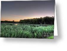 Streaky Swamp Sunrise Greeting Card