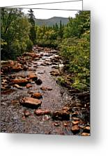 Stream Along Gros Morne Trail In Gros Morne Np-nl Greeting Card
