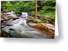 Stream At Ricketts Glen Greeting Card