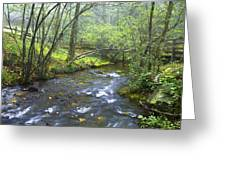 Stream Below Amicalola Falls Greeting Card