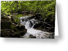 Stream In The Forest Greeting Card