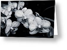 Stream Of Orchids Greeting Card