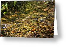 Stream Water Greeting Card