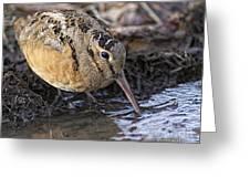 Streamside Woodcock Greeting Card