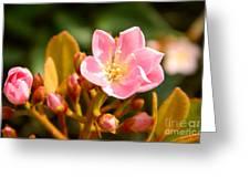 Street Flower Greeting Card