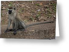 Street Monkey Greeting Card