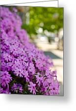 Street Wildflower Greeting Card
