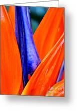 Strelitzia Colour Greeting Card