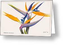 Strelitzia Flowers Greeting Card