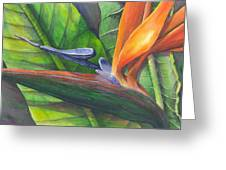 Strelitzia Reginae Greeting Card