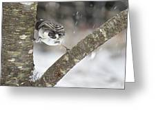 Stretched Greeting Card