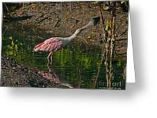 Stretched Out Pink Spoonbill Greeting Card