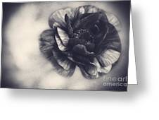 Striking In Black And White Greeting Card