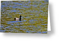 Striking Scaup Greeting Card