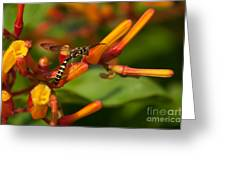 Striped Bee Greeting Card