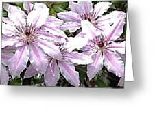 Striped Clematis Greeting Card