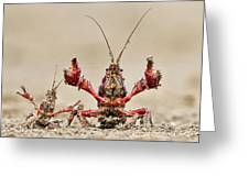 Striped Crayfish  Greeting Card