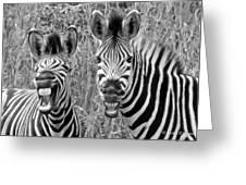 Striped Donkeys Zebra Chapman's Race Greeting Card