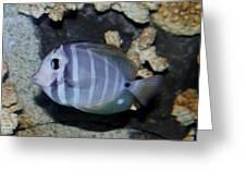Striped Fish Greeting Card