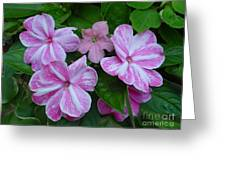 Striped Flower Greeting Card