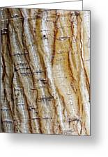 Striped Maple Greeting Card