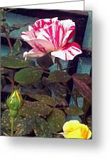 Striped Rose And Yellow 2 Greeting Card