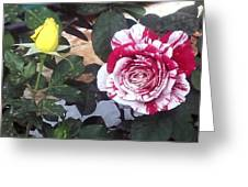 Striped Rose And Yellow Greeting Card