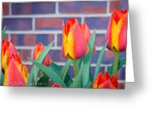 Striped Tulips Greeting Card