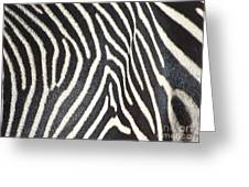 Stripes And Ripples Greeting Card
