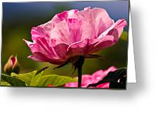 Stripes On  Roses Greeting Card