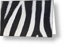 Stripes On Zebra Greeting Card