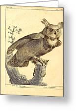 Strix Virginiana Owl Greeting Card