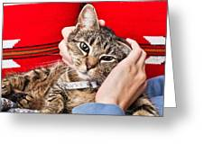 Stroking A Cat Greeting Card by Tom Gowanlock