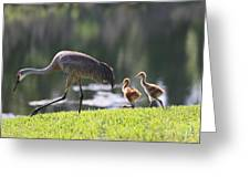 Stroll By The Pond Greeting Card