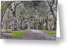 Plantation Drive Greeting Card