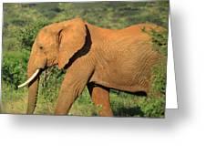 Strolling Elephant Greeting Card