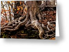 Strong Roots Greeting Card by Louis Dallara