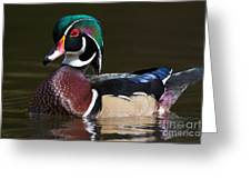 Strutting His Stuff - Wood Duck Greeting Card
