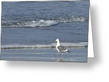 Strutting Seagull Greeting Card