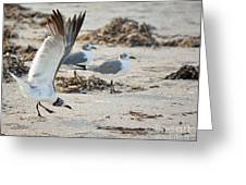 Strutting Seagull On The Beach Greeting Card
