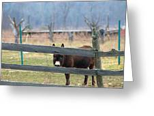 Stubborn As A Mule Greeting Card by Rhonda Humphreys