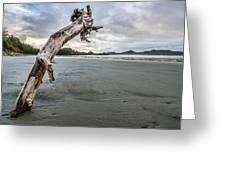 Stuck Log Greeting Card