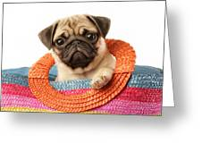 Stuck Pug Greeting Card by Greg Cuddiford
