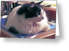 Studio Cat Greeting Card