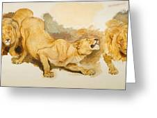 Study For Daniel In The Lions Den Greeting Card