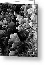 Study In Black And White 1 Greeting Card by Steve Patton