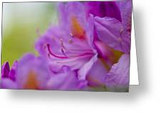 Study In Purples Greeting Card