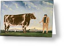 Study Of A Shorthorn Greeting Card